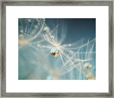 South Sea Pearl Framed Print by Amy Tyler