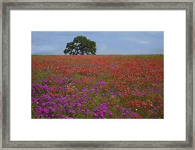 South Texas Bloom Framed Print