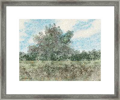 South Texas Brush Country I Framed Print