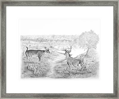 South Texas Stand Off Framed Print by Steve Maynard