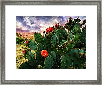 South Texas Sunset Framed Print by Matt Smith