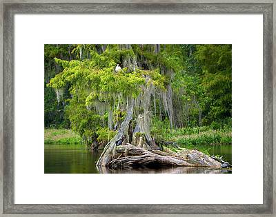 Southern Beauty Framed Print by Bill Chambers