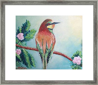 Southern Bee-eater Framed Print