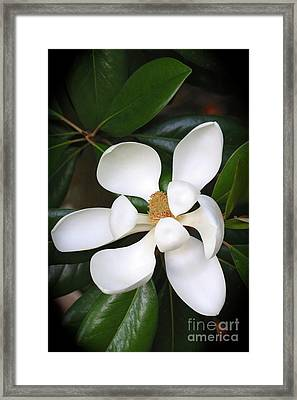 Southern Charm Magnolia Grandiflora Framed Print
