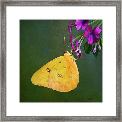 Southern Dogface Butterfly Framed Print by Thanh Thuy Nguyen
