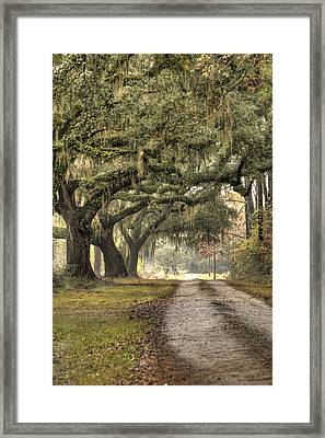 Southern Drive Live Oaks And Spanish Moss Framed Print