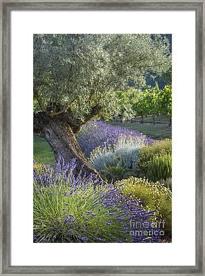 Southern France Garden Framed Print