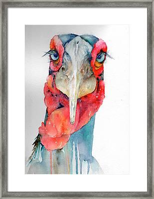 Southern Hornbill Framed Print by Maureen Moore