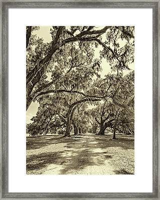 Southern Lane - Evergreen Plantation -sepia Framed Print by Steve Harrington