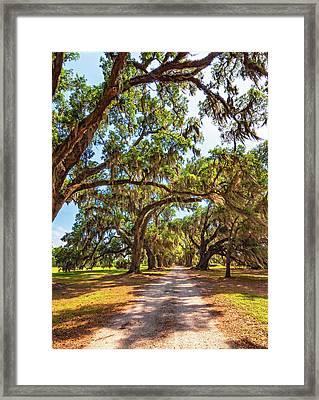 Southern Lane - Evergreen Plantation Framed Print by Steve Harrington