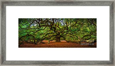 Angel Oak In Charleston Framed Print