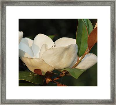 Southern Magnolia Framed Print by Diane Luke
