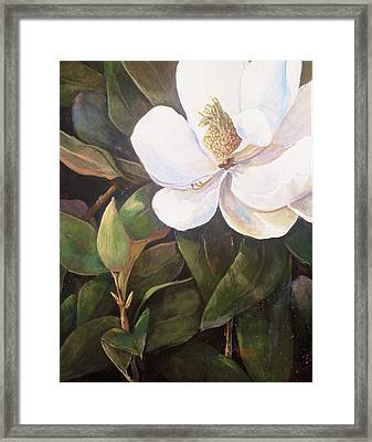 Southern Magnolia Framed Print by Jimmie Trotter
