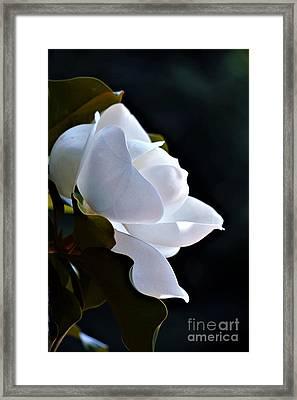 Southern Magnolia Profile Framed Print