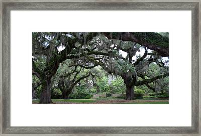 Southern Mist Framed Print by David and Lynn Keller