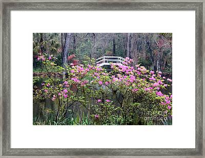 Southern Pond With Azaleas And Bridge Framed Print by Carol Groenen
