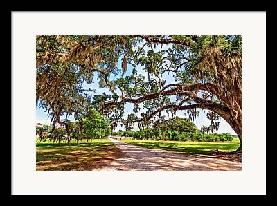 Evergreen Plantation Photographs Framed Prints