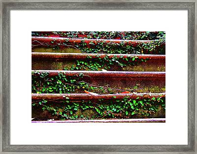 Southern Ivy Steps Framed Print by JAMART Photography