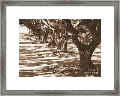 Southern Sunlight On Live Oaks Framed Print by Carol Groenen