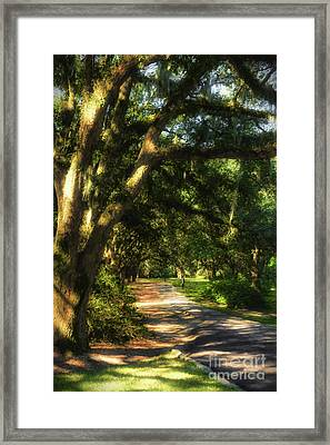Southern Sunshine Framed Print by Mel Steinhauer