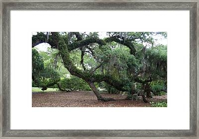 Southern Support Framed Print by David and Lynn Keller