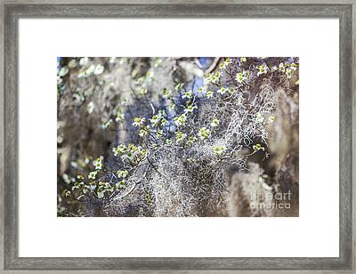 Southern Visions Framed Print by Joan McCool