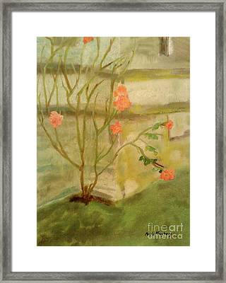 Southwick Hall Rose Framed Print