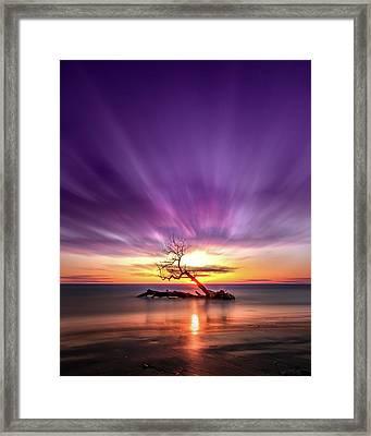 Southwick Tree - Henderson, Ny. Lake Ontario Southwick Beach State Park Sunset Long Exposure Framed Print by Bradley P Smith