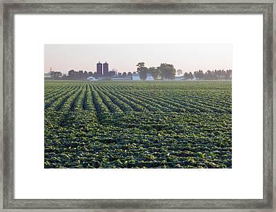 Soy Bean Field, Distant Farm Buildings Framed Print