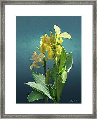 Spade's Yellow Canna Lily Framed Print by Spadecaller