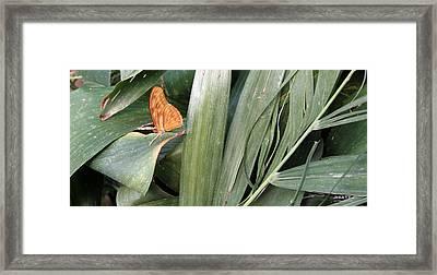 Spanish Delight Framed Print