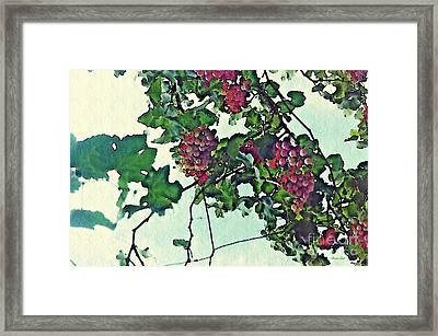 Spanish Grapes Framed Print by Sarah Loft