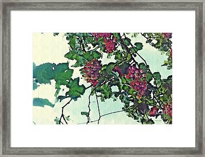 Spanish Grapes Framed Print by Sarah Loft