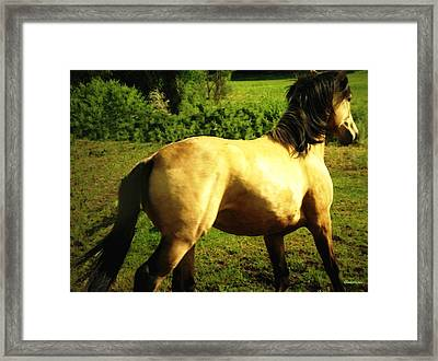 Framed Print featuring the photograph Spanish Horse Dancing by Anastasia Savage Ealy