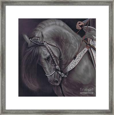 Spanish Horse Framed Print
