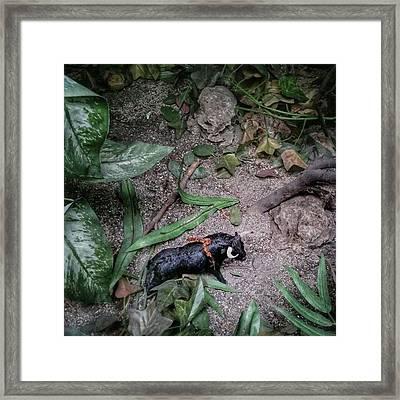 Spanish Jungle #bull #bullfighting Framed Print