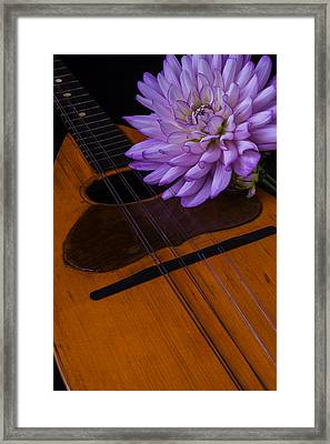 Spanish Mandolin And Dahlia Framed Print