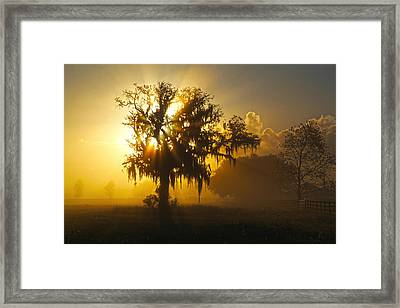 Spanish Morning Framed Print