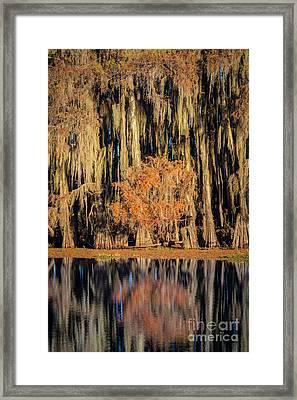 Spanish Moss At Caddo Lake Framed Print