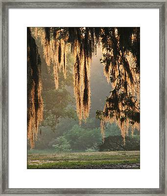 Spanish Moss In The Morning Framed Print by Robert Meanor