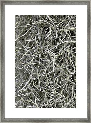 Spanish Moss Framed Print by Inga Spence