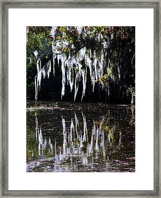 Spanish Moss Reflection Framed Print