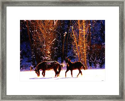 Spanish Mustangs Playing In The Powder Snow Framed Print by Anastasia Savage Ealy