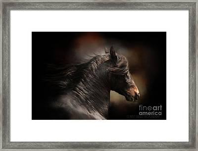 Spanish Stallion Framed Print