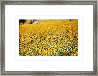 Spanish Sunflowers Framed Print