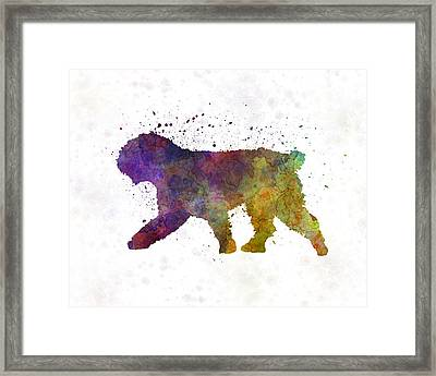 Spanish Water Dog In Watercolor Framed Print