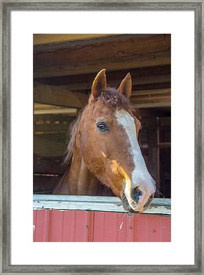 Spara 16066 Framed Print