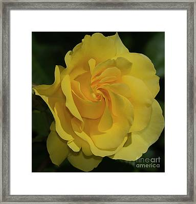 Sparkle And Shine Rose Framed Print