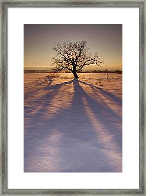 Sparkle In The Crown Framed Print
