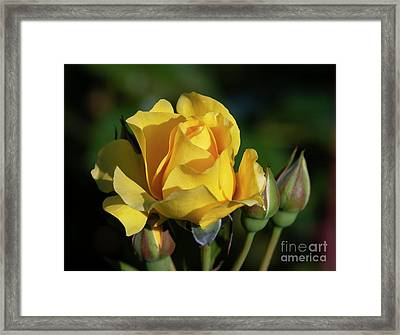 Sparkle N Shine Rose 6 Framed Print